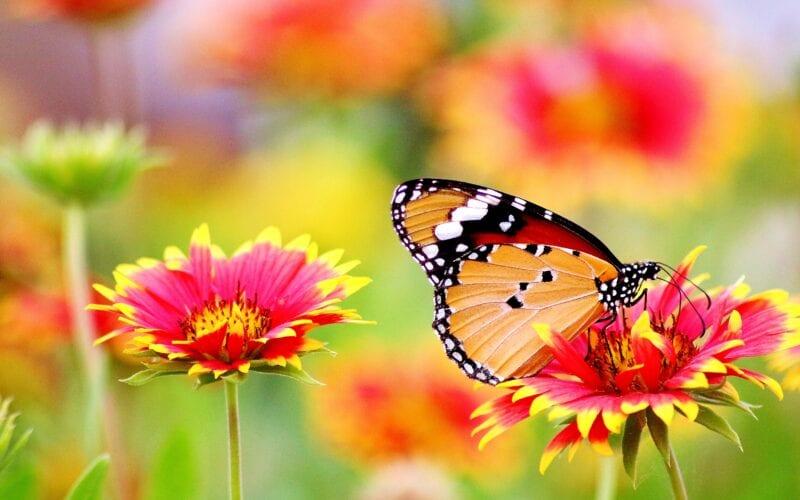 Vlinders op een uitvaart